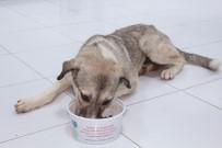 ÇÖP KONTEYNERİ - Ölüme Terk Edilen Köpek Koruma Altında