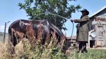 KOZALAK - Sıcaktan Bunalan Atlarını Yıkayarak Serinletiyorlar
