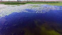 İLKBAHAR - Beyşehir Gölü 4 Mevsim Farklı Kuş Türlerini Ağırlıyor