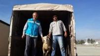 Emet'te 13 Çiftçiye 390 Bin TL Hibe Desteği