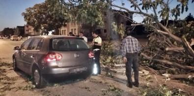 Erzincan'da Seyir Halindeki Aracın Üzerine Ağaç Devrildi