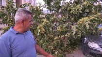 KALDIRIM ÇALIŞMASI - Seyir Halindeki Otomobilin Üzerine Ağaç Devrildi
