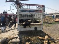 Ağrı'da Trafik Kazası Açıklaması 20 Hayvan Telef Oldu