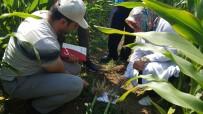 TARIM SİGORTASI - Büyükşehir'in Çiftçiye Desteği Sürüyor