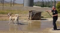 Gerçüş'te Sıcaktan Bunalan Hayvanlarını Serinletiyorlar