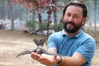 KIRLANGIÇ - Gizemini Koruyan Ebabil Kuşu Karabük'ü Yurt Edindi