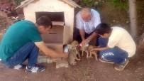 Ölüme Terk Edilen Köpek Yavrularına Gözü Gibi Bakıyorlar