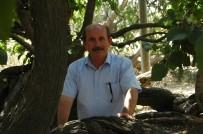 ANKARA BÜYÜKŞEHİR BELEDİYESİ - Polatlı'da Tarihe Tanıklık Eden Ağaçlara Koruma