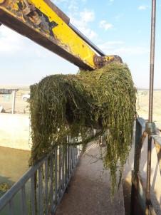 Çiftçiler Sulama Borularını Tıkayan Otları Temizledi