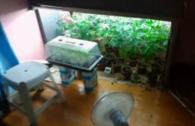 Evin Balkonunu Uyuşturucu Serasına Çevirmişler