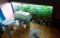 KİMYASAL MADDE - Evin Balkonunu Uyuşturucu Serasına Çevirmişler