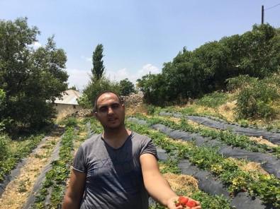 Genç Çiftçi Tut İlçesinde Doğal Çilek Yetiştirmeye Başladı
