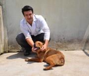 SOKAK KÖPEĞİ - Hayvanseverleri Ayağa Kaldıran Şiddete 625 Lira Ceza