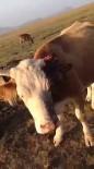 Iğdır'da Hayvanlara Vahşet Saldırı