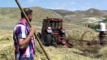 NESIM - Kars'ta Sezonun İlk Organik Buğday Hasadı Başladı