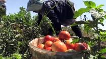 Kilisli Çiftçiler Üretmekten Vazgeçmedi