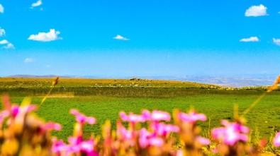 Sarissa Antik Kenti Turizme Kazandırılmayı Bekliyor