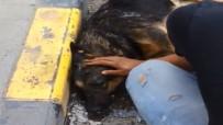 SOKAK KÖPEĞİ - Sıcaktan Bayılan Köpek Suyla Hayata Döndü
