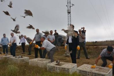 Tekirdağ'da 12 Bin Çil Keklik Doğaya Salındı