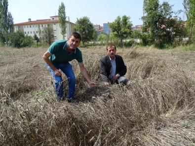 Yağış Nedeniyle Buğday Hasadı Yapılamıyor