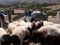 BAYRAM YıLMAZ - Yeşilyurt'ta Mobil Koyun Yıkama Ve İlaçlama