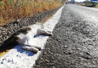 Yolda Çizgi Çalışması Yapan Ekipler Ölü Kediyi De Boyadı