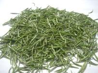 SÜRGÜN - ÇAYKUR Bu Yıl Yaş Çay Sezonunda 475 Kilogram Beyaz Çay Aldı