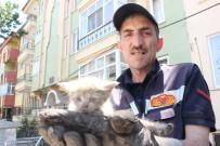 YAVRU KEDİ - Gece Kurtarılan Yavru Kedi Tekrar Aynı Araçta Mahsur Kaldı
