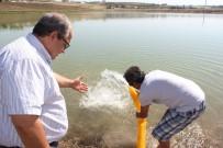 HASANCıK - Göletlerde Balıklandırma Çalışmaları Devam Ediyor