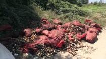 MELEN ÇAYI - Melen Çayı'na Dökülen Çürük Soğanları Ayıkladılar