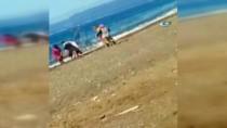 YUNUS BALIĞI - Ölü Yunus Balığı Sahile Vurdu