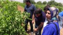 Gercüş'te Çiftçilere Eğitim