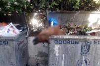 SOKAK KÖPEKLERİ - Bodrum'dan bir vahşet haberi daha