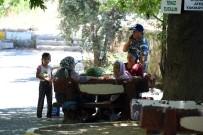 ÇINAR AĞACI - Mersin'de Mesire Alanları Yenileniyor