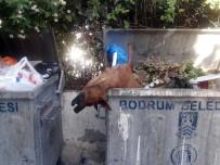 SOKAK KÖPEKLERİ - Öldürülüp Çöpe Atılan Köpekler Bodrum'u Ayağa Kaldırdı