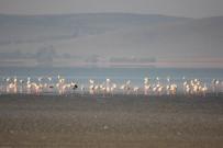 Seyfe Gölünde Flamingolar Arasındaki Turnalar Görenleri Şaşırttı