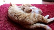 Sokak Kedisi Ve Yavrularının Yeni Evi Sağlık Merkezi Oldu