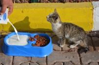 HAYVAN SEVERLER - Aksaray'da Hayvanlar 5 Yıldızlı Otelde