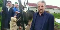 Cumhurbaşkanı Erdoğan Seçilince, Kurban Adağını Yerine Getirdi