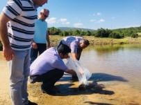 Denizli'de Göl Ve Göletlere 125 Bin Yavru Sazan Balığı Bırakıldı