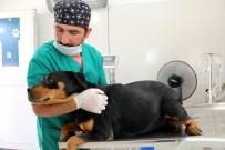 NORMAL DOĞUM - Gebe Köpek Belediyeye Emanet Edildi