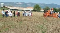 GÖKÇEÖREN - Gördes'de Yerel Buğday Projesi Kapsamında Hasat Yapıldı