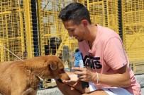 SOKAK HAYVANI - Nilüferli Can Dost Artık Almanya'da Yaşayacak