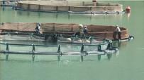 KıLıÇKAYA - Giresun'da Baraj Göllerinde Balık Üretimi Yaygınlaşıyor