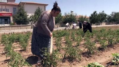 Kriz Dönemlerini 'Hobi Bahçesi' İle Atlatıyorlar