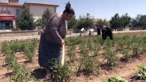HOBİ BAHÇESİ - Kriz Dönemlerini 'Hobi Bahçesi' İle Atlatıyorlar