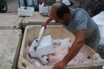 ALABALIK - Tokat'tan Japonya'ya Somon İhracatı