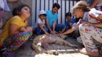 HAYVAN SEVERLER - Adıyaman Belediyesi Öğrencilere Hayvan Sevgisini Aşılıyor