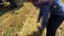MUSTAFA ÖZCAN - 'Balyacıların' Zorlu Mesaisi