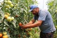 TAZE FASULYE - Manisa Büyükşehir'in Projesi Üreticiye Kazandırdı